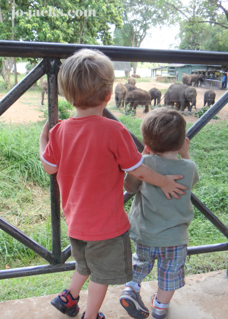 Safari with children