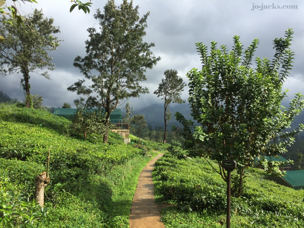 Hikes in Ella and Tea plantations